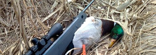 Пневматика для охоты на утку, зайца, фазана, ворону