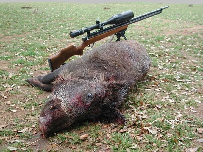 Охота с пневматическим оружием